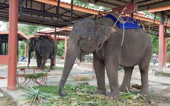 ปทส.บุกตรวจปางช้างชื่อดังชลบุรี พบพิรุธฝังไมโครชิพ2เชือก เร่งสอบที่มา