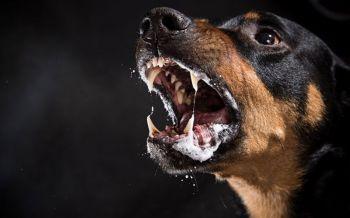 เอกซเรย์ตามชาวบ้านฉีดวัคซีน พบกินกระบือติดเชื้อ'หมาบ้า'