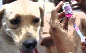 จี้ชาวบ้านฉีดวัคซีน  สัมผัส-กินควายตาย  ติดเชื้อ'พิษสุนัขบ้า'