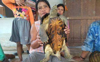 คอหวยรีบจด! ชาวบ้านฝันลี้ลับให้โชค หลังจับเต่ายักษ์ได้ สุดท้ายสมใจได้เลขเด็ด