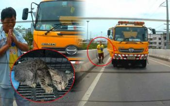 นับถือน้ำใจ! หนุ่มพลเมืองดี จอดรถช่วยชีวิต\'ลูกแมว\'บนสะพานกลับรถ (ชมคลิป)