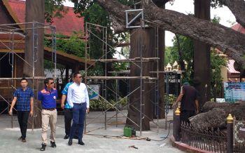 ซ่อมเสร็จแล้ว'ต้นมะขามยักษ์1,000ปี'ในวรรณคดีขุนช้างขุนแผน