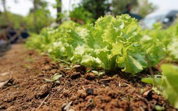 ผุดคณะทำงานเผยแพร่วิธี'เกษตรอินทรีย์' มุ่งเลิกใช้สารเคมี ยาฆ่าหญ้า-แมลง