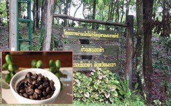พาณิชย์พะเยานำผู้ประกอบการเชื่อมโยงตลาดกาแฟ ชูแหล่งท่องเที่ยวธรรมชาติที่เชียงคำ