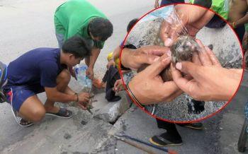 คลิปกู้ภัยเมืองคอนช่วย \'เจ้าบุญรอด\' ลูกแมวหลงทางพลัดตกท่อระบายน้ำ