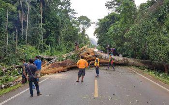 ฝนตกลมแรงพัดต้นเหรียงยักษ์อายุกว่า100ปีหักปิดการจราจรนานกว่า 2 ชั่วโมง