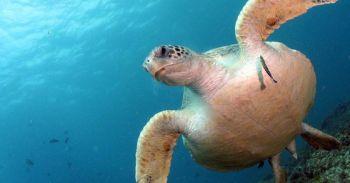 Science Update : เศษพลาสติกชิ้นเดียวทำลูกเต่าทะเลตายได้