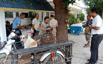 ปศุสัตว์พรหมคีรีแจ้งความผู้ชำแหละเนื้อโคติดเชื้อหมาบ้าขายชาวบ้าน-ลงพื้นที่ฉีดวัคซีน