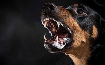 เจ้าของสุนัขรู้ไว้! หากเลี้ยงแล้วสร้างความเสียหายต่อร่างกายและทรัพย์สินของผู้อื่นมีโทษทั้งจำ-ปรับ