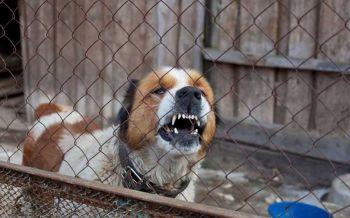 พฤติกรรมสุนัขเห็นเด็กเป็นเหยื่อ \'อย่ามองหน้า จ้องตา เหมือนยิ่งยั่วยุสัตว์\'